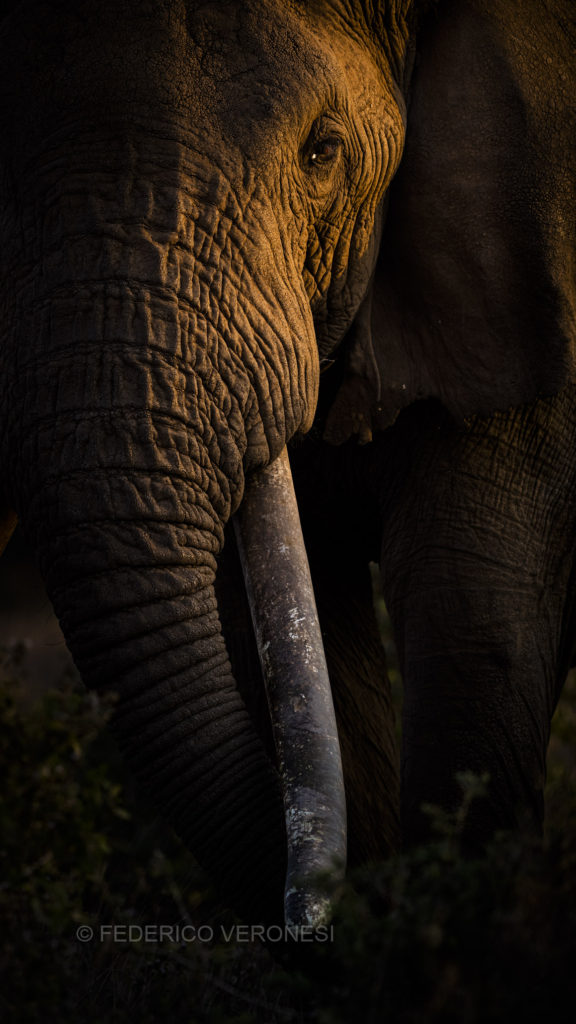 Kenya_Amboseli_photo-safaris_elephant-tusker