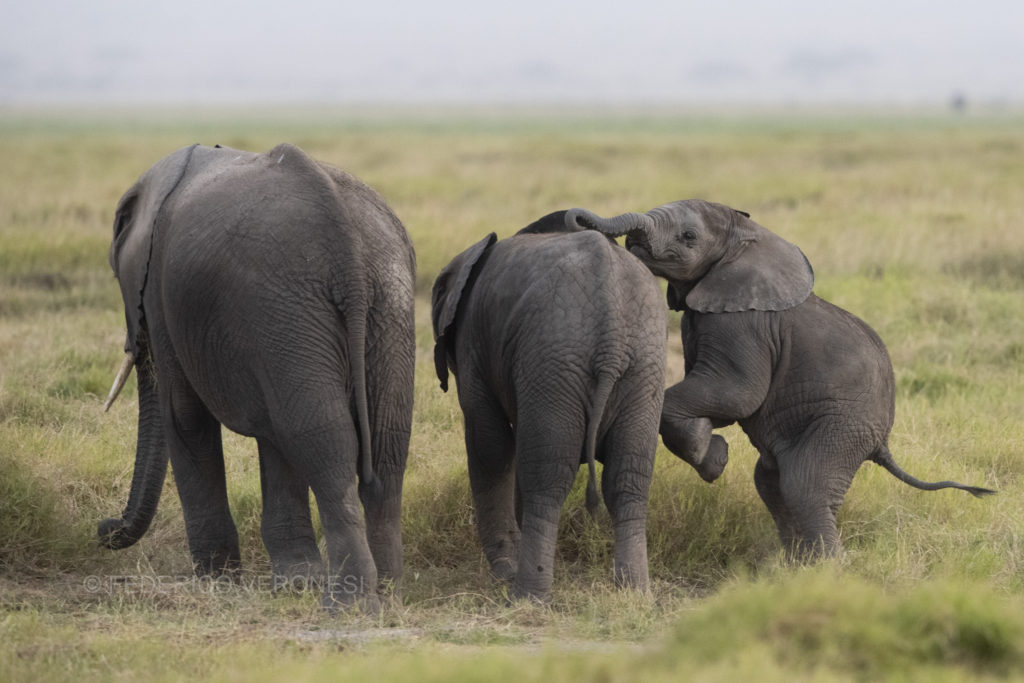 Kenya_Amboseli_photo-safaris_elephant