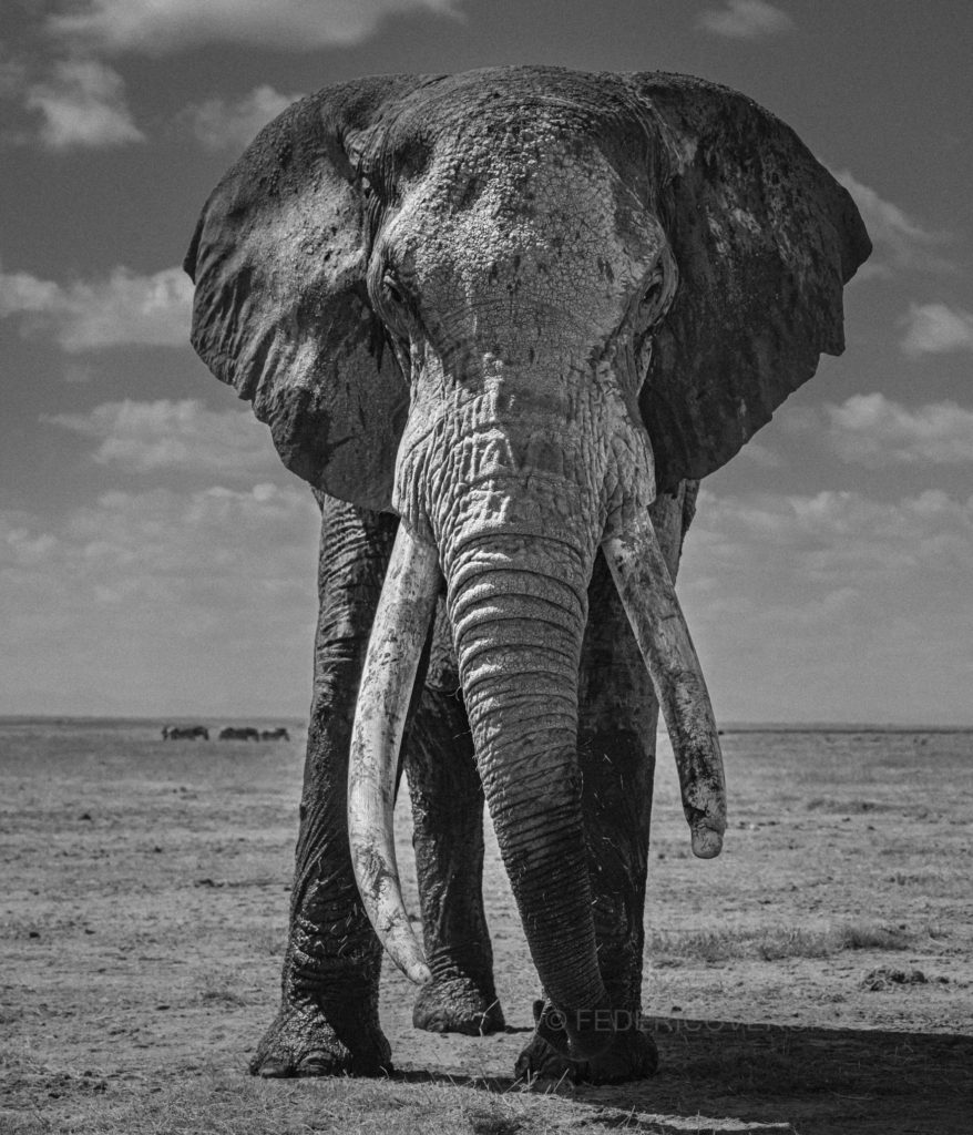 Kenya_Photo_safari_Amboseli_elephants_tusker