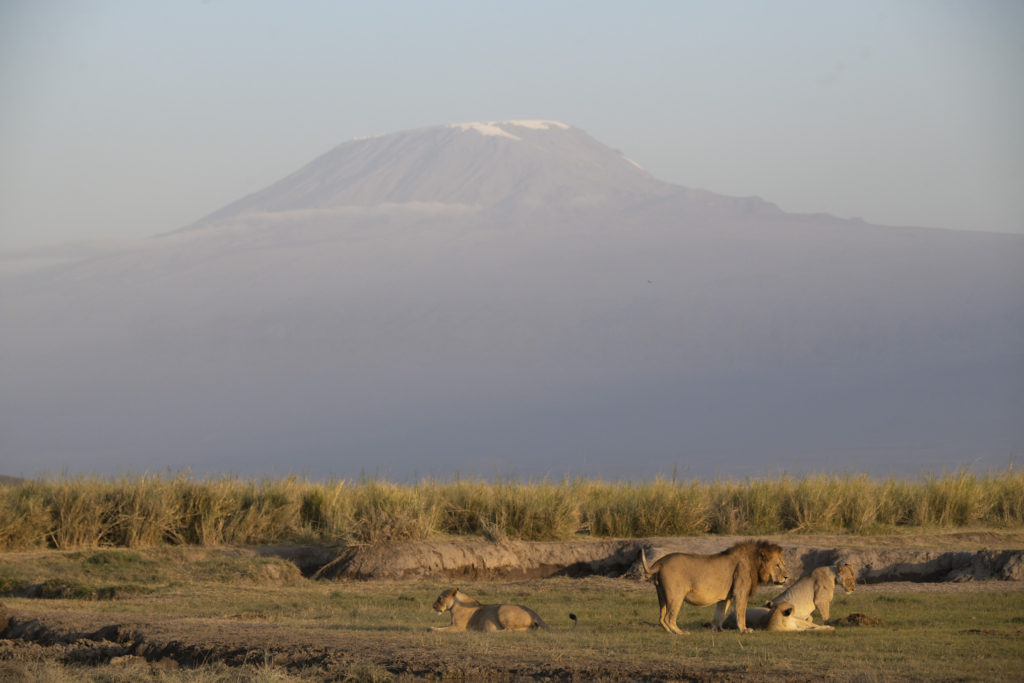 Kenya_Photo_safari_Lion_Amboseli