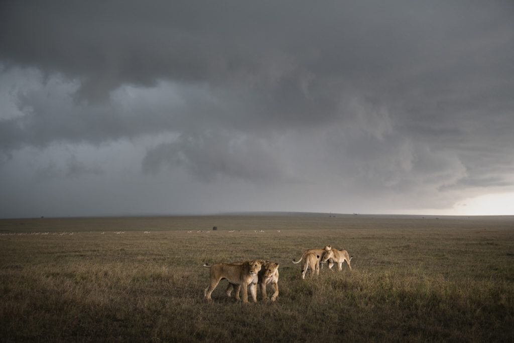 Kenya_Photo_safari_masai_Mara_Lions