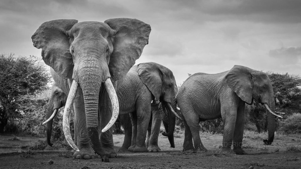 african_wildlife_photo_safaris_Amboseli-NP_Kenya