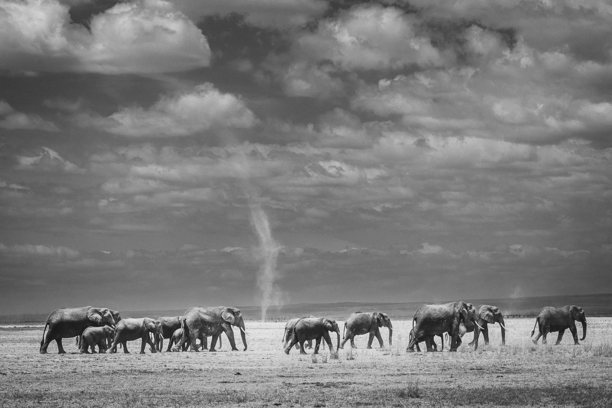 Kenya_Amboseli_Elephants_Photo_Safari