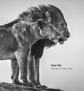 african wildlife photography book